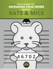 Your Guide To Defending Your Home Against Rats & Mice