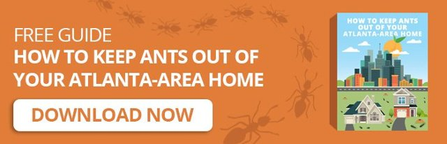 Free Guide - How To Keep Ants Out Of Your Atlanta-Area Home