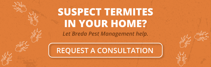 Suspect termites in your home? Let Breda Pest Management help - Request a consultation