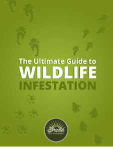 The Ultimate Guide to Wildlife Infestation