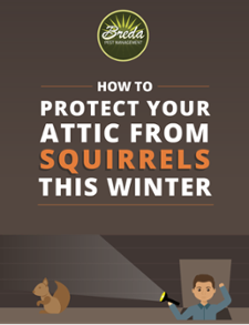 How To Protect Your Attic From Squirrels This Winter