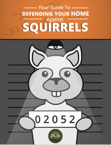 Your Guide To Defending Your Home Against Squirrels