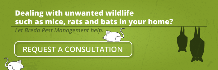 Dealing with unwanted wildlife such as mice, rats, and bats in your home? Let Breda Pest Management help. Request a consultation.