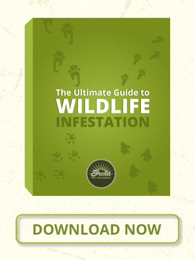 The Ultimate Guide To Wildlife Infestation - Download Now
