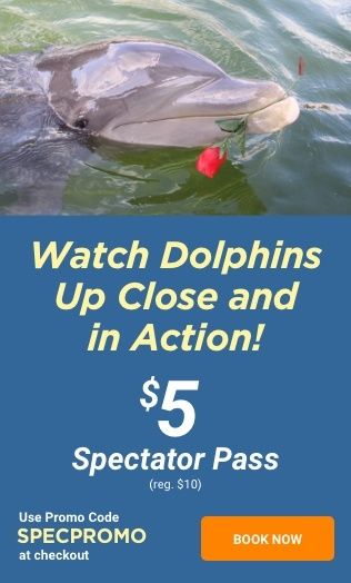 Watch Dolphins Up Close and in Action! $5 Spectator Pass