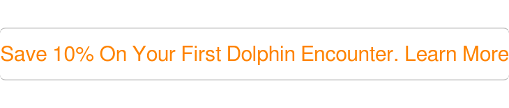 Save 10% On Your First Dolphin Encounter. Learn More