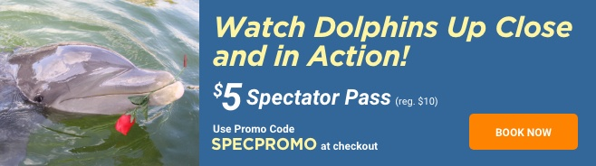 Dolphins Plus Spectator Pass