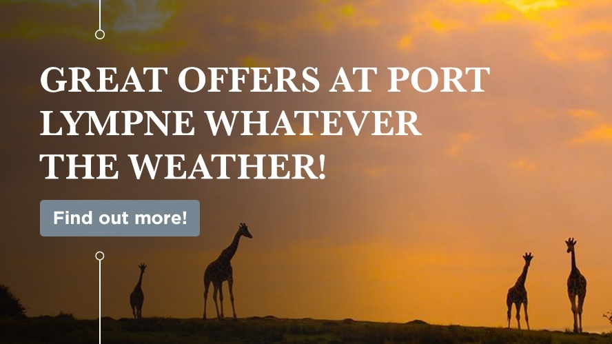 Great Offers At Port Lympne Whatever the Weather!