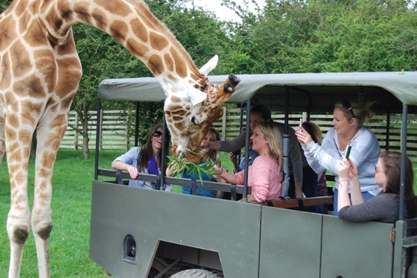 Giraffe Safari at Port Lympne Hotel & Reserve