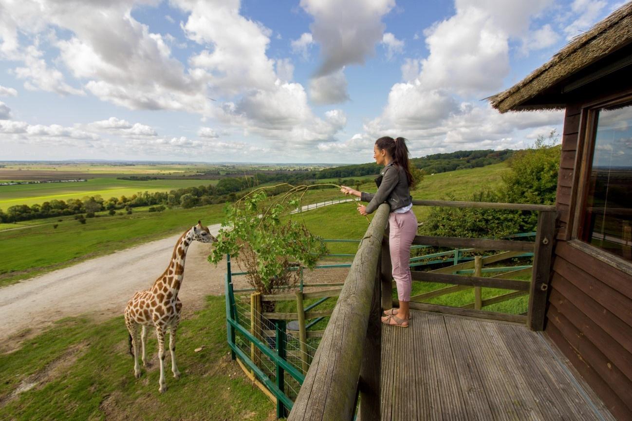 Giraffe Lodge 30% off