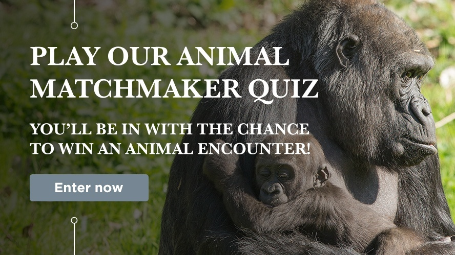 Find out which animal you should adopt!