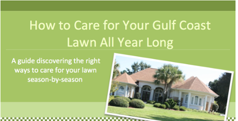 How to care for your gulf coast lawn all year long