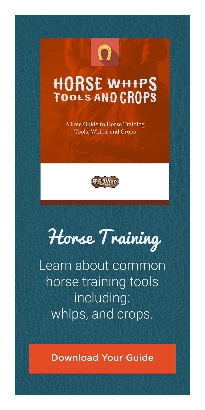 horse-training-ebook-cta-sidebar