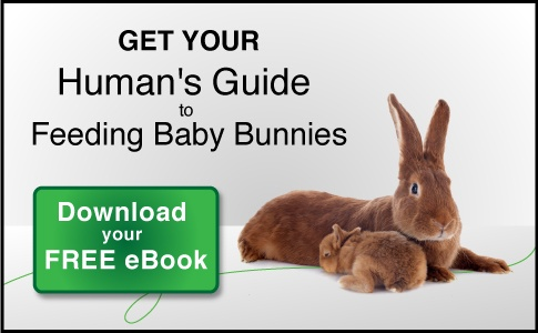 Get your Human's Guide to Feeding Baby Bunnies download