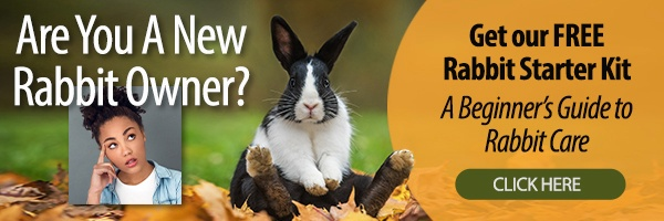 Rabbit Starter Kit - A Beginner's Guide to Rabbit Care