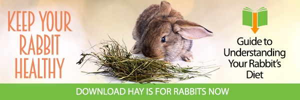 Hay is for Rabbits - Guide to Understanding Your Rabbit's Diet