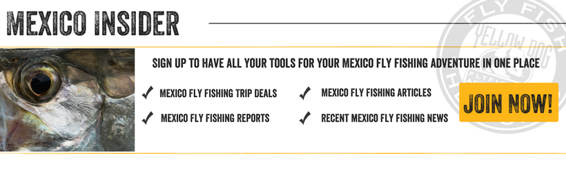 Mexico Fly Fishing Insider