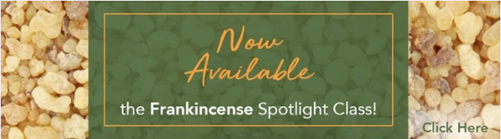 Frankincense Essential Oil Spotlight