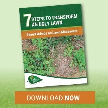 7 tips to transform an ugly lawn in Allentown, Bethlehem or Easton, PA