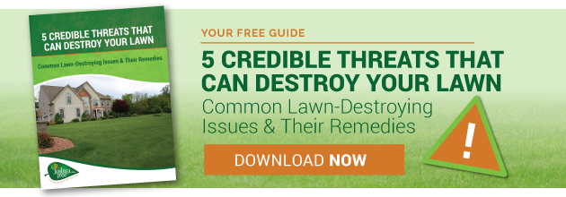 Threats to beautiful grass and lawn care remedies.