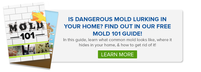 mold-101-homeowners-guide-titan-environmental