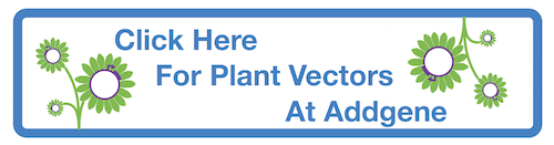 Click Here For Plant Vectors At Addgene