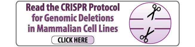 Read the CRISPR protocol for genomic deletions in mammalian cell lines click here