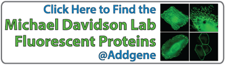 Click here to find the Michael Davidson Lab Fluorescent Proteins at Addgene