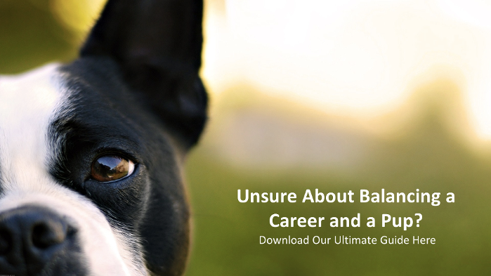 Download Our Guide to  Balancing A Career and A Pup!