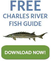 Free Charles River Fsh Guide