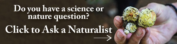 Have a science or nature question? As a Naturalist!