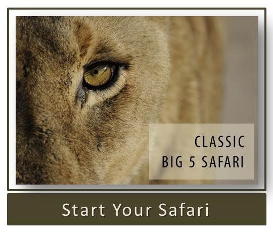 Classic Big 5 Safari