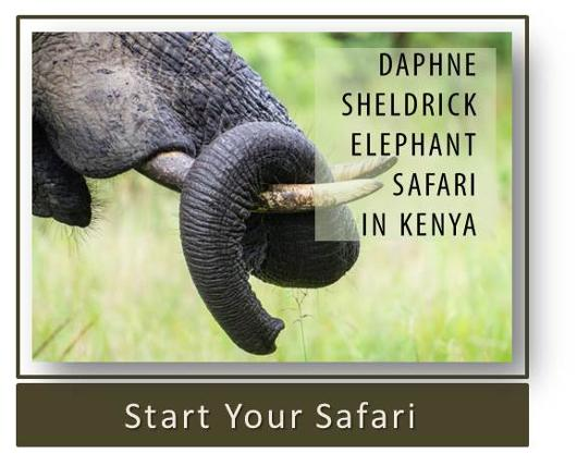 Daphne Sheldrick Elephant Safari in Kenya