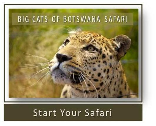 Big Cats of Botswana Safari