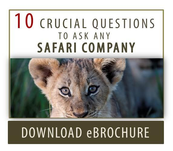 10 Questions to Ask Any Safari Company