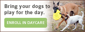 Bring your dogs to play for the day. Enroll in Daycare