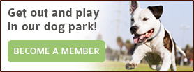 Get out and play in our dog park! Become A Member