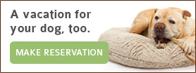 A vacation for your dog, too. Make Reservation