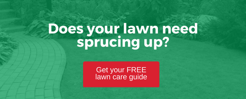 spring lawn tips vancouver