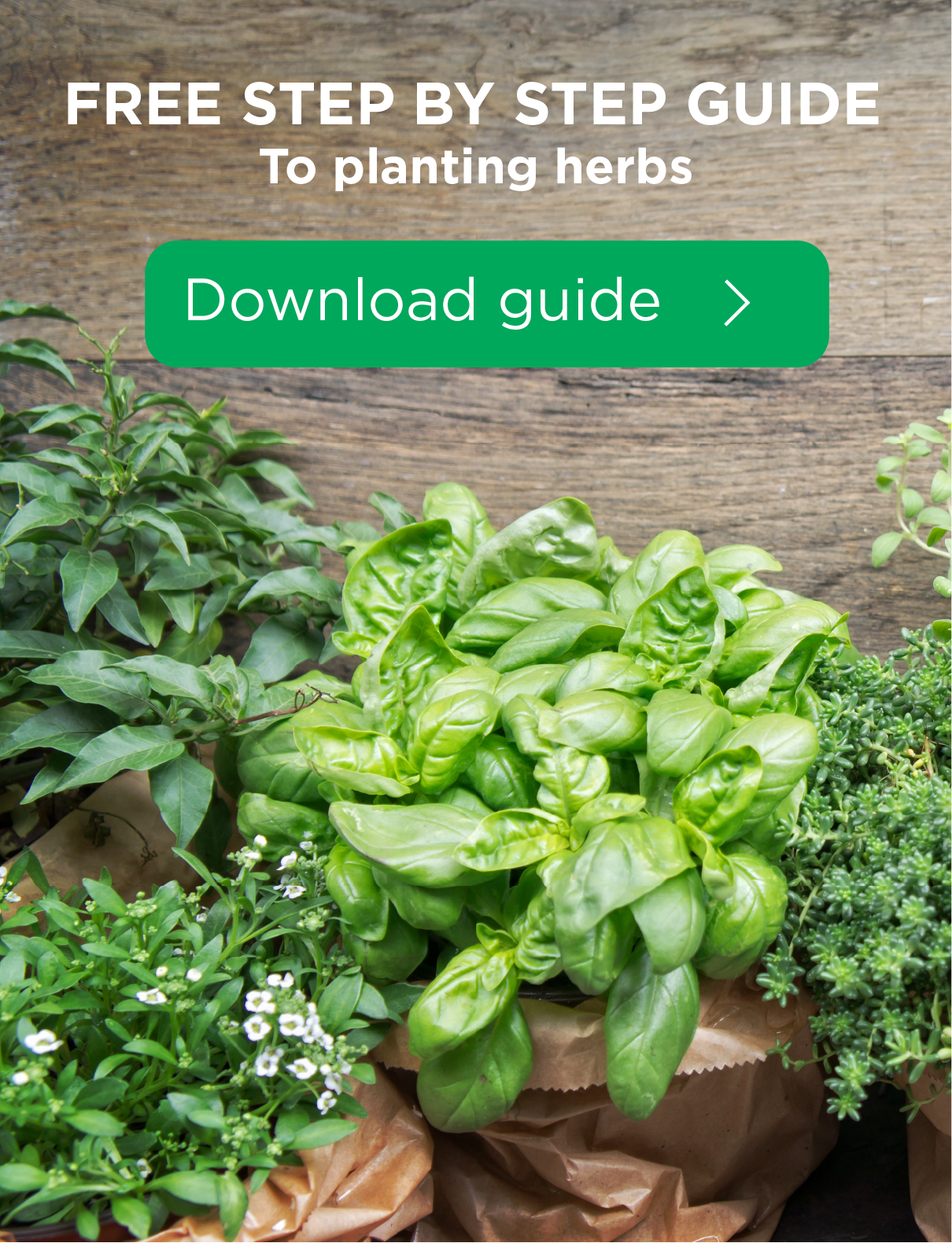 Guide to planting herbs