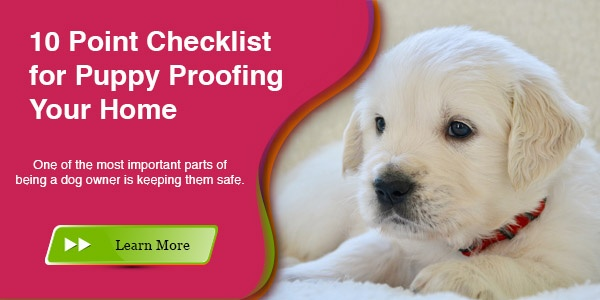 Puppy Proofing Your Home Checklist