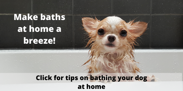 tips-for-bathing-your-dog-at-home