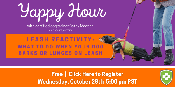 yappy hour leash reactivity sign up