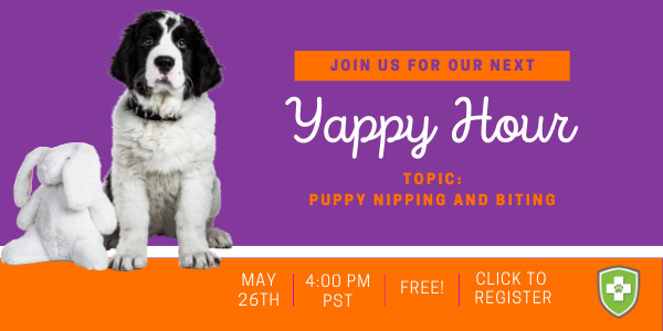 puppy-yappy-hour-click-to-register