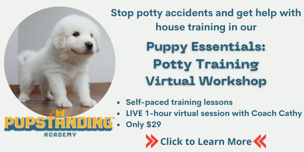 Potty training issues? Take our potty training workshop