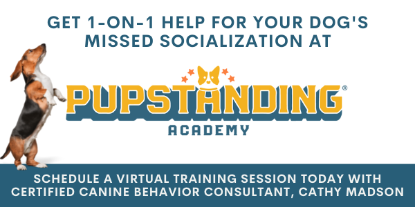 private virtual dog training for your dog's missed socialization