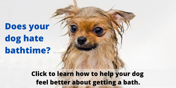 How-to-help-your-dog-feel-better-about-baths
