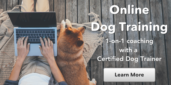 personalized virtual dog training