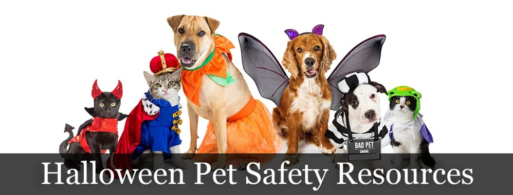 Have a safe Halloween with your pet!