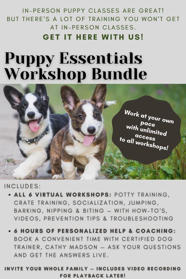 Get half off with the Puppy Essentials 6 Workshop Bundle